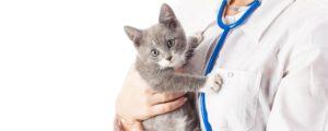 ordine veterinari Ticino