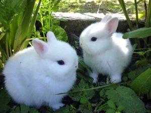 veterinari animali esotici ticino