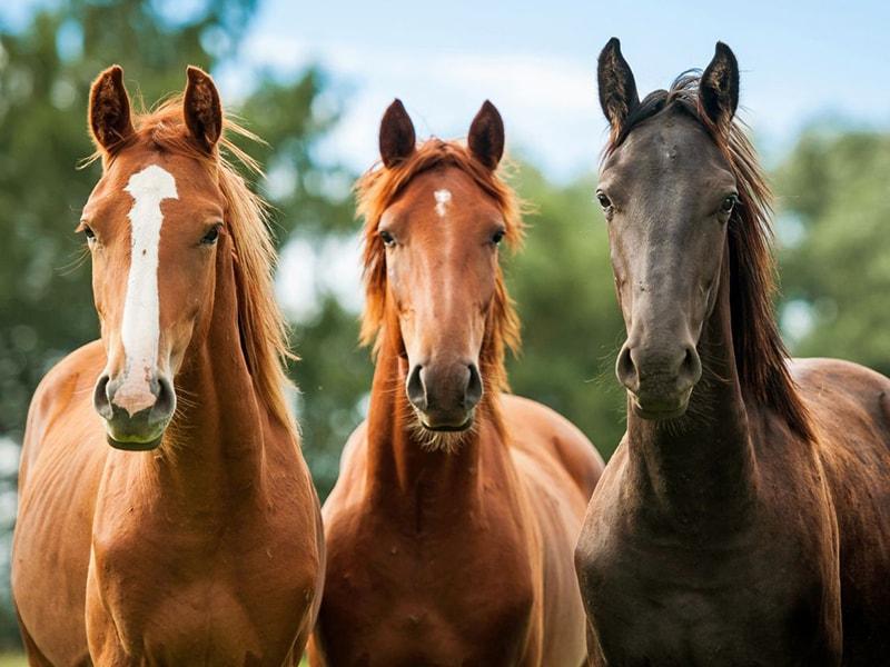 veterinario cavalli