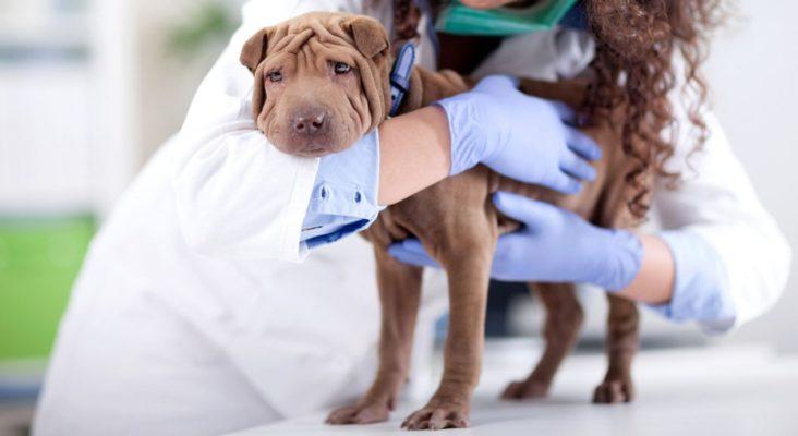 nuova veste assistente studio veterinario