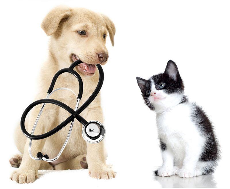 urgenza veterinario